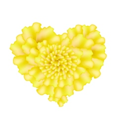 Yellow French Marigold Flowers in A Heart Shape vector image