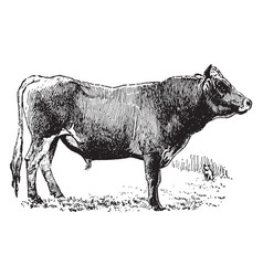 Jersey bull vintage vector