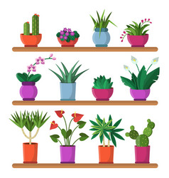 Plants in pots on the shelves vector