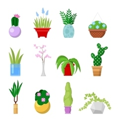 Potted Home Plants Set Decorative Houseplants vector