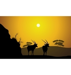 Scenery morning in hill with antelope vector