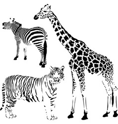 African striped and spotty animals vector image vector image