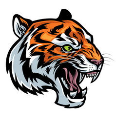 angry tiger head roaring vector image