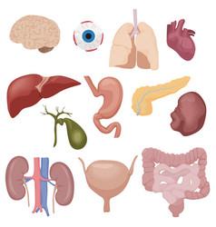 Human body internal parts organs set isolated vector image