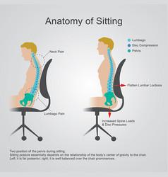 anatomy of sitting vector image vector image