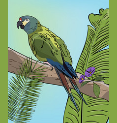 green macaw parrot on branch vector image vector image