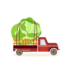 Agricultural harvest concept with big cabbage in vector