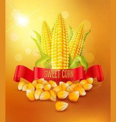 Background with grains and cobs of corn vector
