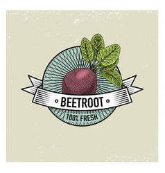 beetroot vintage set of labels emblems or logo vector image
