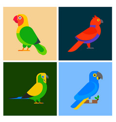 Parrots birds breed species animal flayer brochure vector