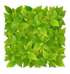 square shape from green leaves vector image