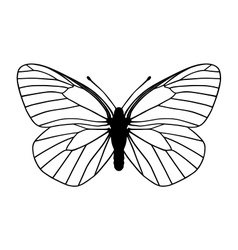white butterfly vector image