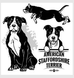 American staffordshire terrier dog - set vector