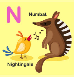 Animal alphabet letter n-numbat nightingale vector