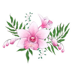 exotic tropical floral bouquets paphiopedilum vector image