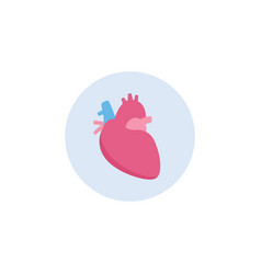 human heart icon isolated on white background vector image