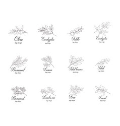 Set plant branches greenery design elements vector