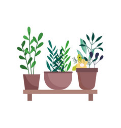 shelf with potted plants flowers decoration vector image