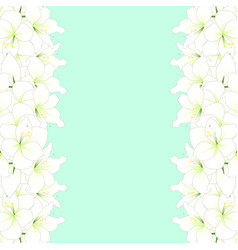 White amaryllis border - hippeastrum christmas vector