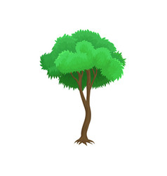 tree with green leaves and rounded crown vector image