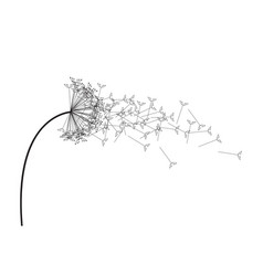 black and white dandelion vector image