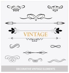 calligraphic vintage elemets and symbols set vector image