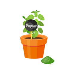 oregano and table with title vector image