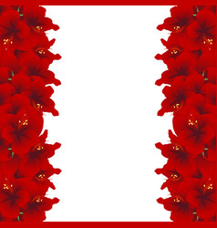 Red amaryllis border - hippeastrum christmas vector