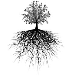 root tree vector image vector image