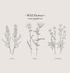 wild flowers vintage set vector image