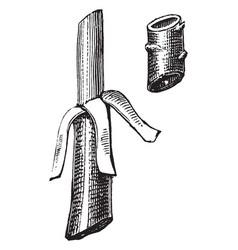 Flute budding vintage vector
