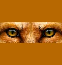 Red fox fox eyes close-up vector