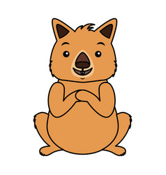 wombat australian fauna on white background vector image
