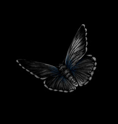 Butterfly on a black background hand drawn vector