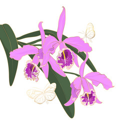 calathea orchid flower pink purple bloom blossom vector image