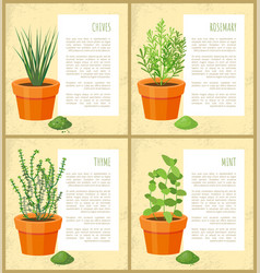 chives and rosemary collection vector image