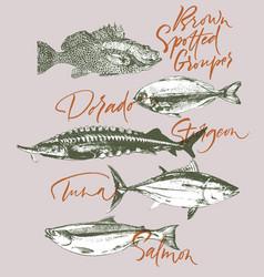 Fish tuna salmon grouper sturgeon dorado vector