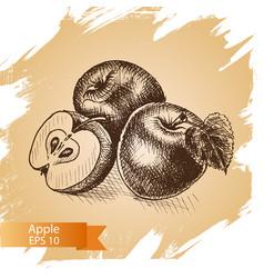 sketch - apple vector image
