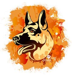 watercolor image of the head of a dog of the vector image vector image