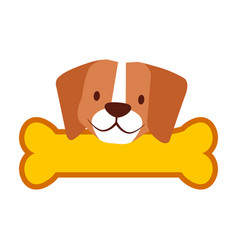 cute beagle dog and bone vector image