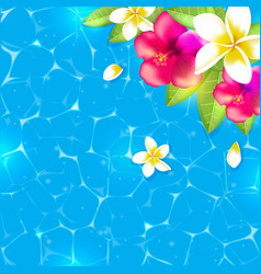 flowers and leaves in the water vector image