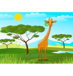 Giraffe eating leaves in Africa at sunset vector