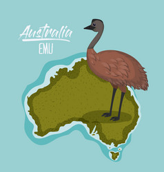 Poster emu in australia map in green surrounded by vector