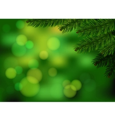 Green fir branch background vector image