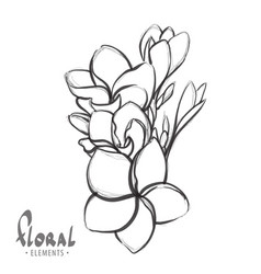 tropical flowers on a white background vector image vector image