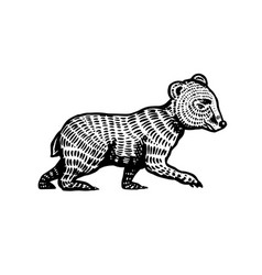 baby little bear brown wild grizzly animal hand vector image