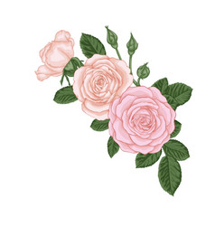 beautiful bouquet with vintage pink roses buds vector image
