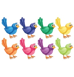 Eight colorful birds vector image