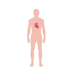 male body with heart icon infographic vector image