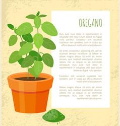 Oregano plant and powder text vector